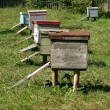 Stock Photo: Several beehives at green grass