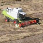 Machine harvesting the corn field — Stock Photo