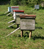Several beehives at green grass — Stock Photo