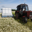 Stock Photo: Machine harvesting Camomile medicinal