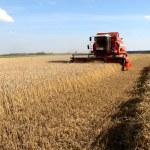 Machine harvesting — Stock Photo
