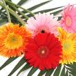 Bouquet gerbera daisies - Stock Photo