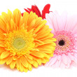 Bouquet gerbera daisies — Stock Photo
