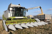 Combine harvesting a corn crop — Stockfoto