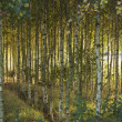 Stock Photo: Autumn in birch forest