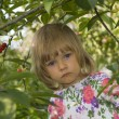 Stock Photo: Girl in cherry orchard