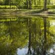 Pond in the park in sunny spring day — Stock Photo