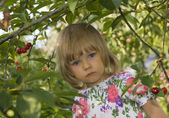 Girl in cherry orchard — Stock Photo