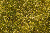 Abstract mossy background — Stock Photo