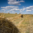Stockfoto: Harvest time