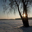 Stock Photo: Winter nature