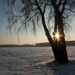 Stockfoto: Winter nature