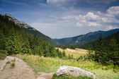 Green meadow in mountains — Stock Photo