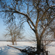 Stockfoto: Winter orchard