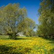 Stock Photo: View on green meadow