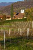 Vineyard on Italian hill — Stock Photo