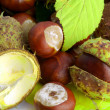 Chestnut — Stock Photo #2007906