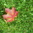 Single red maple leaf on green green gra — Stock Photo