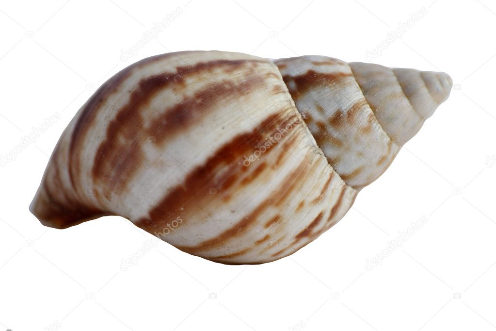 Shell 6 — Stock Photo #2008420