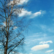 Tree on sky — Stock Photo #2012335