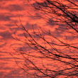 Branch in sunset colour — Stock Photo #2014140