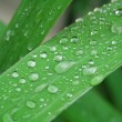 Drop on leaf — Stock Photo
