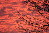 Branch in sunset colour — Stock Photo