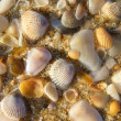 Wet shells — Stock Photo