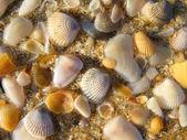 Wet shells — Stock Photo