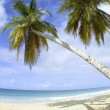 Palm trees and beach — Foto Stock #1884484