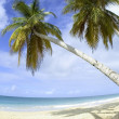 Stock Photo: Palm trees and beach