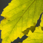 Leaf with beautiful sun light — Stock Photo