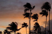 Palm trees and sunset — Stockfoto