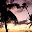 Stock Photo: Palm trees and sunset
