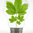Leaf in a lamp - ecology — Stock Photo
