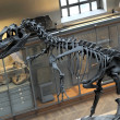 Dinosaur skeleton - Stock Photo