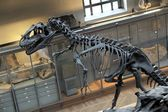 Dinosaurus skelet — Stockfoto