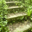 Royalty-Free Stock Photo: Green stairway