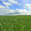 Background abstract field — Stock Photo