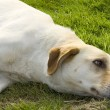 Dog in the grass - Stock Photo