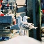 Seagulls in docks — Stock Photo