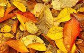 Döda blad — Stockfoto