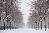 Sníh v paříži — Stock fotografie