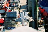 Seagulls in docks — Stock Photo