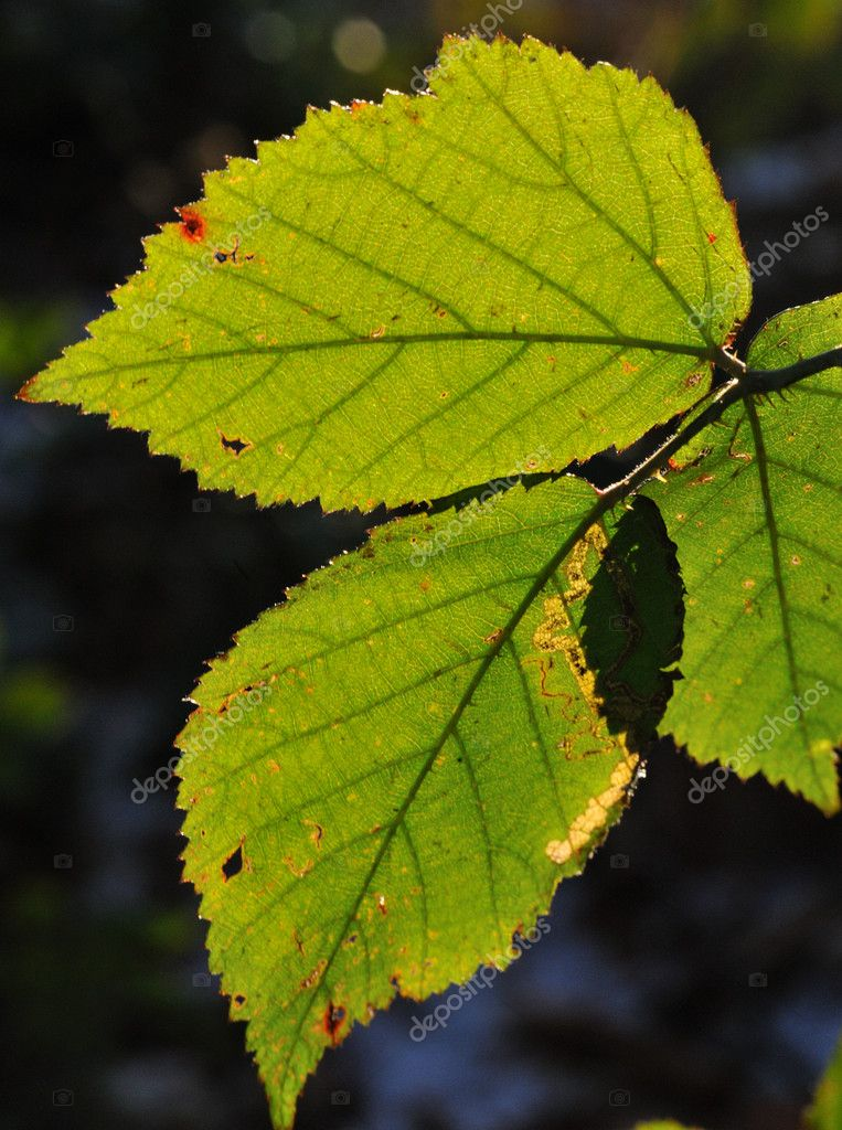 Leaf with beautiful sun light — Stock Photo #1983170