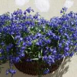 Flowers spring festival — Stock Photo