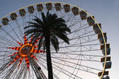 Giant wheel and palm tree — Stock Photo