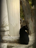 Black cat on muslim cemetery — Stock Photo