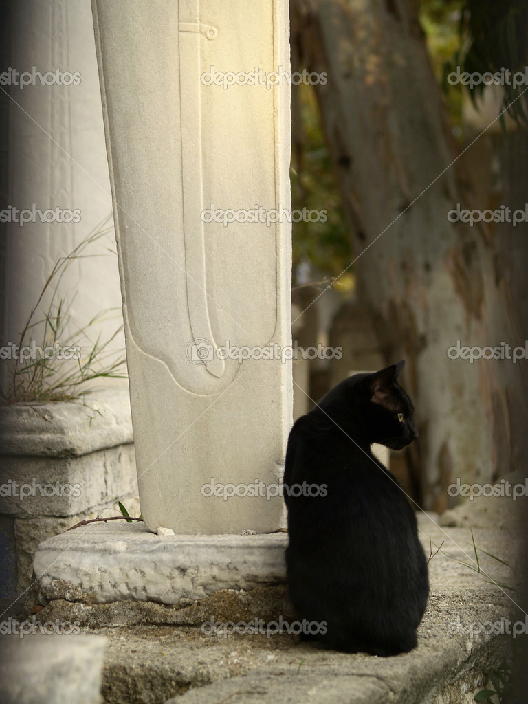 Black cat sitting on muslim cemetery — Foto Stock #2032225