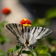 Butterfly on a flower — Stock Photo #2154087